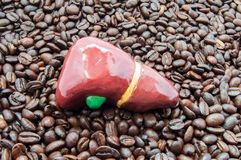 Печень и кофе или кофеин Анатомическая диаграмма печени лежа на зажаренных в духовке кофейных зернах Влияние и влияния кофе или к стоковые фото