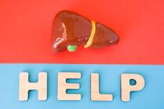 Печень с словом помощи Анатомическая модель печени и желчного пузыря на красной предпосылке, под письмами которые делают помощь с Стоковое фото RF