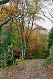 Пешая осень древесин пути, Ardens, Валлония, Бельгия Стоковое Изображение