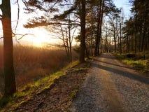 Пешеходная дорога через лес стоковое изображение rf