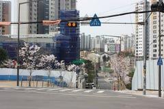 Пешеходный crosswalk в Южной Корее Сеула Стоковые Фотографии RF