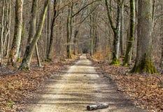 Пешеходная дорожка в лесе Стоковые Фото