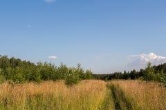 Пешеходная дорожка в поле Стоковая Фотография RF