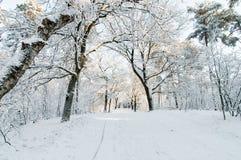 Пешеходная дорожка Snowy Стоковая Фотография RF
