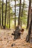 Пешие ботинки в лесе Стоковая Фотография RF