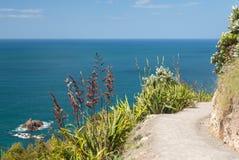 Пеший путь вокруг держателя на Тауранге в NZ Стоковое Изображение RF
