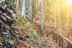 Пеший путь с перилами в лиственном лесе осени, лучем солнца Стоковая Фотография