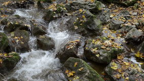 Пеший путь через каньон Maisinger Schlucht в Баварии Германии Малый пропускать реки Лес бука вокруг сток-видео