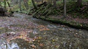 Пеший путь через каньон Maisinger Schlucht в Баварии Германии Малый пропускать реки Лес бука вокруг акции видеоматериалы