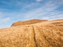 Пеший путь через луг стоковые фото