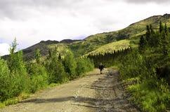 Пеший туризм Аляски Стоковое Изображение RF