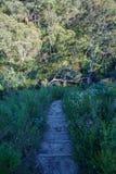 Пеший туризм большой прогулки clifftop, голубые горы, Австралия 2 стоковая фотография