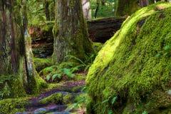 Пеший туризм вдоль Salmon River Mt Национальный лес клобука Стоковое Изображение RF