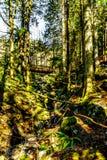 Пеший туризм воздержательного дождевого леса в каскаде понижается региональный парк между городками миссии и Deroche внутри ДО РО стоковые изображения rf