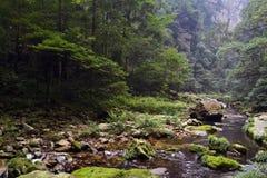 Пеший туризм вокруг парка в живописной местности Wulingyuan Greenies каждые Стоковые Фото