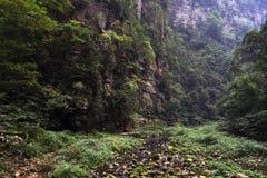 Пеший туризм вокруг парка в живописной местности Wulingyuan Greenies каждые Стоковые Изображения RF
