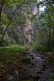 Пеший туризм вокруг парка в живописной местности Wulingyuan Greenies каждые Стоковое Изображение RF
