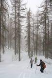 Пеший туризм в белом лесе Стоковое Изображение
