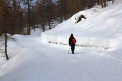 Пеший туризм в белом лесе стоковые изображения rf