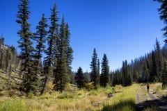 Пеший туризм в высоких сосновых лесах высоты восточной Аризоны Стоковое фото RF