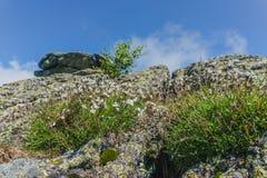Пеший туризм в горах Taganay- национального парка, реки, озера Стоковая Фотография RF