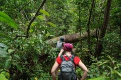 Пеший туризм в глубоких джунглях стоковая фотография rf