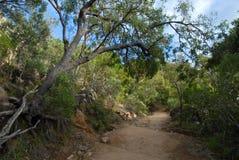 Пеший туризм в кусте, Квинсленд, Австралия стоковые изображения rf