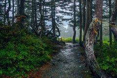 Пеший туризм в дождевом лесе Стоковая Фотография RF