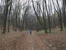 Пеший туризм в осени в лесе без листьев на деревьях стоковые изображения rf
