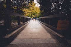 Пеший туризм вдоль променада леса Стоковые Изображения