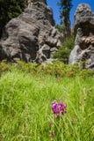 Пеший туризм в парке штата Custer, Южная Дакота стоковое фото rf