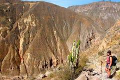 Пеший туризм каньона Colca стоковая фотография