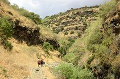 Пеший туризм на Голанских высотах в Израиле Стоковые Фото