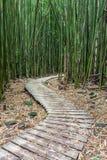 Пеший туризм через бамбуковый лес Стоковые Изображения RF