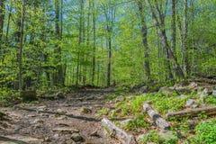 Пеший туризм через лес накаляя зеленых листьев стоковая фотография rf