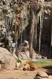 Пещера львов Стоковые Изображения
