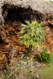 Пещера Makauwahi Стоковое Изображение RF