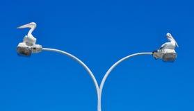 2 пеликана на светильнике в сини Стоковые Фотографии RF