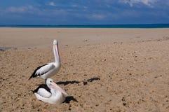 2 пеликана: Отмель Индийского океана в западной Австралии Стоковые Изображения