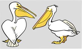 2 пеликана иллюстрация вектора