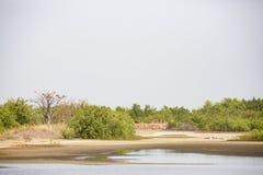 Пеликаны в дереве и на том основании стоковое фото rf