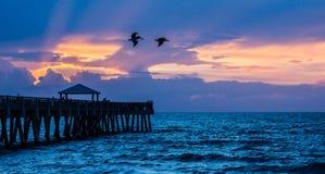 Пеликаны над пристанью рыбной ловли стоковое изображение rf