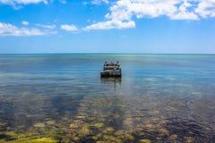 Пеликаны Key West Стоковые Изображения RF