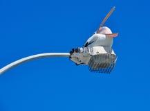 Пеликан: Вытянутый мешок клюва и горла Стоковая Фотография RF