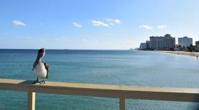 Пеликан и пристань рыбной ловли Стоковые Фото
