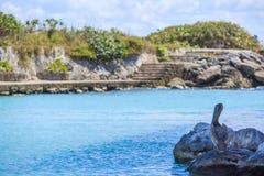 Пеликан на пляже Стоковые Фотографии RF