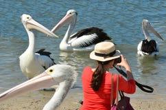 Пеликан - птицы воды Стоковые Фотографии RF