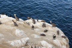 пеликан утра Марины пер california коричневого цвета клюва Барвары центральный прибрежный предыдущий садился на насест пристань s Стоковые Изображения