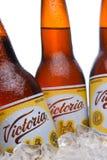 Пивные бутылки Виктории в льде Стоковые Фото