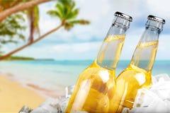 Пивные бутылки в льде на предпосылке пляжа Стоковые Фото